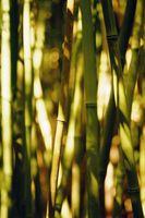 El bambú como una cobertura Valla