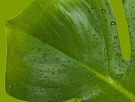 ¿Por qué necesitan los fotosíntesis de las plantas?