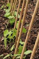 Soportes para plantas de hortalizas