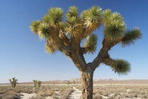 Las adaptaciones en las hojas de las plantas tienen que Desert