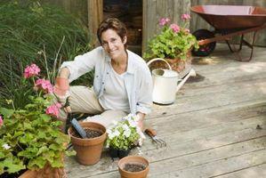 ¿Cómo se Ácido Bórico utilizan en el jardín?