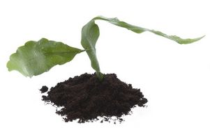 Condiciones óptimas de suelo