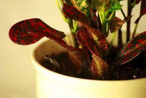 Cómo limpiar Casa de las plantas y moho tóxico