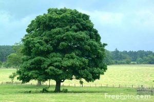 ¿Cómo crece un árbol?