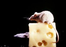 Can Moles de sonido como los ratones en las paredes?