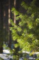 Como paisaje con mantillo de pino y paja Juntos