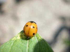 Hacer los agricultores orgánicos utilizan pesticidas?
