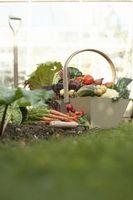 Cómo plantar un nuevo jardín de verduras