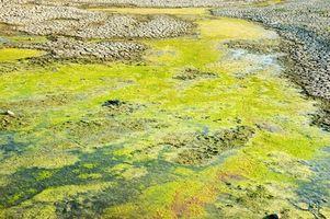 Cosas que matan a la lenteja de agua en estanques