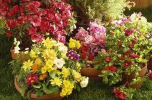 Cuáles son las funciones de los diferentes tipos de flores?