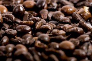 Cómo cosechar Cacao