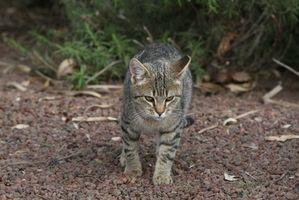 Cómo evitar que los gatos las usen macizos de flores como las cajas de arena