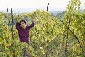 Cómo construir una cerca de alambre soldado de viñedos