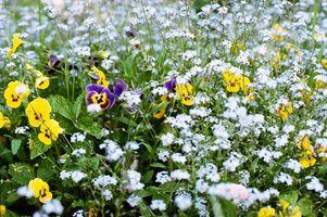 Identificación de los diferentes tipos de flores