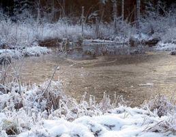 Cómo mantener vivos a los peces durante el invierno en un estanque