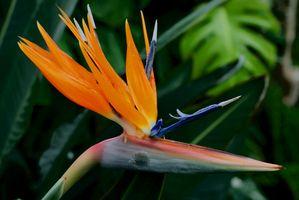 Diferentes tipos de flores en Nigeria