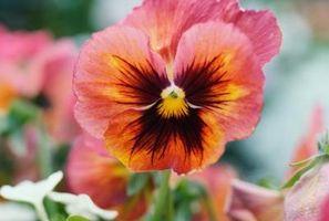 ¿Qué flor se puede plantar en una maceta que sea sobre todo en la sombra?