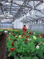 ¿Cómo hacer crecer las semillas en un invernadero