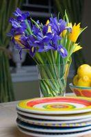 Colores flor del iris