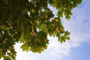 La sucesión ecológica Actividades