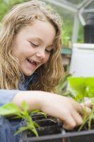 Etapas de crecimiento para las verduras