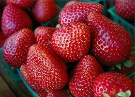 Cuándo plantar fresas en la zona 6?