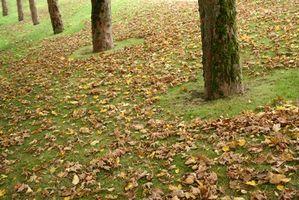 Cómo utilizar las hojas como abono orgánico para un jardín de verduras