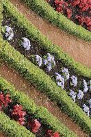 ¿Cuál es la diferencia entre la cal y el suelo agrícola cal Estabilización?