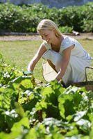 Los gusanos son en el jardín vegetal del suelo perjudicial?