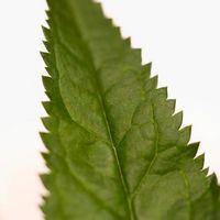¿Qué plantas dan una picadura cuando se toca distintas de las ortigas?