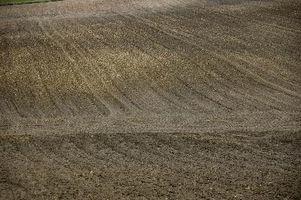 Vs. ácido El suelo alcalino