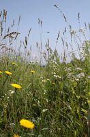 Flores para los jardines orgánicos