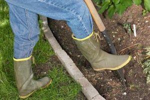 Cómo plantar bulbos de azafrán