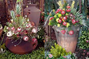 Las mejores plantas para jardines del envase