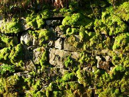 Cómo limpiar Musgo en una pared de piedra