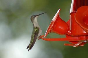 Cómo mantener a las avispas y abejas fuera de un alimentador del colibrí