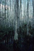 Tres razones por las que los humedales son importantes para los ecosistemas