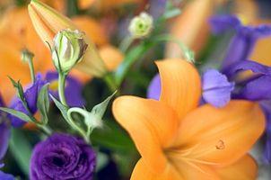 Centros de flores de bricolaje