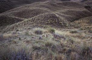 ¿Qué tipo de hierba de planta para detener la erosión?