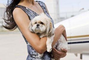 Productos de limpieza seguros para hogares con mascotas