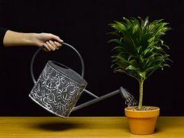 Como salvar una planta que ha sido con exceso de agua