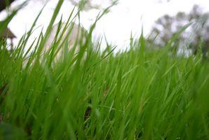 Cómo quitar la hierba y de Sod