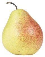Oidio en los árboles de pera