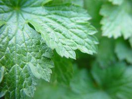 El nitrógeno de fertilizantes uso en la agricultura ecológica