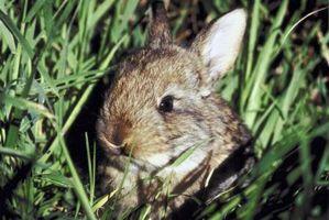 Los conejos no comen alpiste?