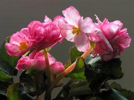Las plantas con flores para la sombra en la zona 9 de la Florida
