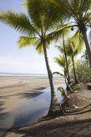 Adaptaciones del árbol de palma