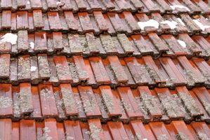 ¿Cómo se limpia hongos o algas de las superficies de techo?