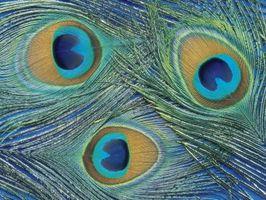 Guirnaldas con las plumas del pavo real