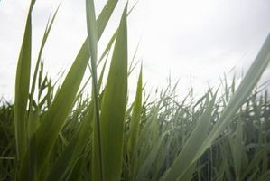 ¿Se puede utilizar aceite de motor viejo como fertilizante?